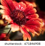 colorful flower with water... | Shutterstock . vector #671846908