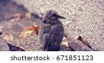 small wet bird | Shutterstock . vector #671851123
