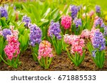close up of surprise pink and...   Shutterstock . vector #671885533
