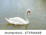 white goose floating | Shutterstock . vector #671966668