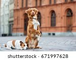 two adorable dogs begging on... | Shutterstock . vector #671997628