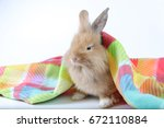 lovely brown rabbit in colorful ... | Shutterstock . vector #672110884