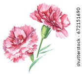 red carnations. watercolor hand ... | Shutterstock . vector #672151690