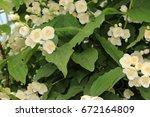 the flowers in the garden | Shutterstock . vector #672164809