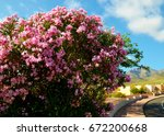 blooming oleander bushes with... | Shutterstock . vector #672200668