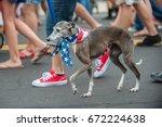 Patriotic Whippet Dog Walking...