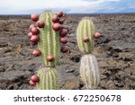 Prickly Pear Cactus With I's...