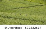 Small photo of La Neuville-Aux-Larris, France - June 9, 2017: Workers in the vineyard in La Neuville-Aux-Larris near Epernay in the Champagne district Vallee de la Marne in France.
