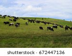 cow herd grazing in the meadow... | Shutterstock . vector #672447136