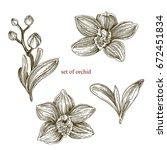 set of orchids. leaves  flowers ... | Shutterstock .eps vector #672451834