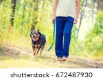 Stock photo man walking with a dog in the forest the man holding a dog on a leash 672487930