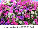 Small photo of Million Bells bloom in multiple colors in a hanging basket