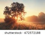 Morning Sun Shine Through Tree...