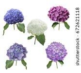 Stock photo hydrangea flowers set isolated on white background 672621118
