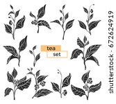 set of tea bush branches with... | Shutterstock .eps vector #672624919