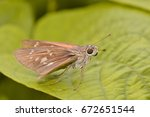 skippers butterfly on a green... | Shutterstock . vector #672651544