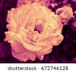 heart of a rose. magic petals.... | Shutterstock . vector #672746128