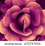 heart of a rose. magic petals.... | Shutterstock . vector #672757924