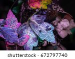 colorful fall leaves | Shutterstock . vector #672797740
