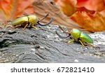 beetles   lamprima adolphinae... | Shutterstock . vector #672821410