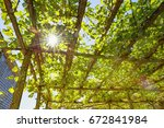 sunlight through the grape... | Shutterstock . vector #672841984