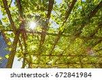 sunlight through the grape...   Shutterstock . vector #672841984