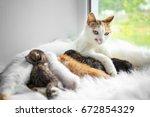 Cat Feeding Cute Little Kitten...