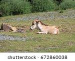 Small photo of Young kulan , also known as the Transcaspian wild ass. Wild life animal. Equus hemionus kulan