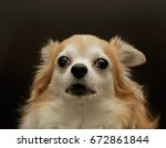 brown chihuahua dog | Shutterstock . vector #672861844