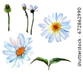 wildflower daisy flower in a... | Shutterstock . vector #672862990