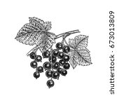 black currant berries.... | Shutterstock .eps vector #673013809