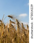 a barley crop  with a copy... | Shutterstock . vector #673014229