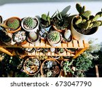 home garden with cactus plants | Shutterstock . vector #673047790