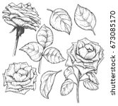 sketch rose blossom flowers set ... | Shutterstock .eps vector #673085170