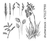 hand drawn set of cereal crops. ... | Shutterstock .eps vector #673127950