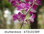 flower in botanic garden | Shutterstock . vector #673131589