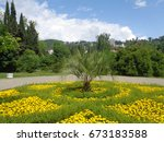 Yellow flowers and palm tree in flowerbed in city park, green trees around - stock photo