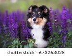 adorable sheltie puppy portrait ... | Shutterstock . vector #673263028