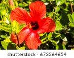 flora on rhodes  greece