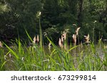 plants and water in late spring   Shutterstock . vector #673299814
