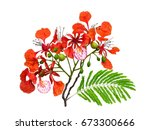Royal Poinciana Red Flowers An...