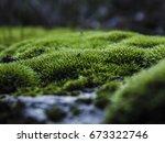 Moss Growing On River Rocks...