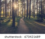 Path In The Forest At Sunset