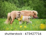 little pony foal with a mare on ... | Shutterstock . vector #673427716