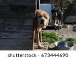 an animal shelter is a place... | Shutterstock . vector #673444690