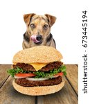 dog looking delicious hamburger ... | Shutterstock . vector #673445194