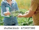 two agronomists negotiating...   Shutterstock . vector #673457380