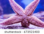 Starfish In Water Close Up