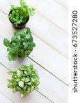 mosaic plant  fittonia... | Shutterstock . vector #673527280