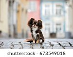 adorable chihuahua dog posing... | Shutterstock . vector #673549018